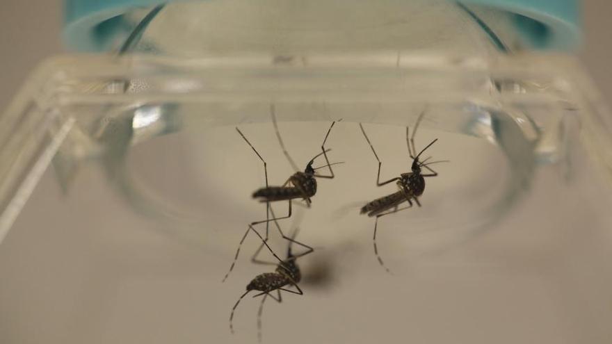 La vacuna contra el zika puede llegar demasiado tarde a Latinoamérica