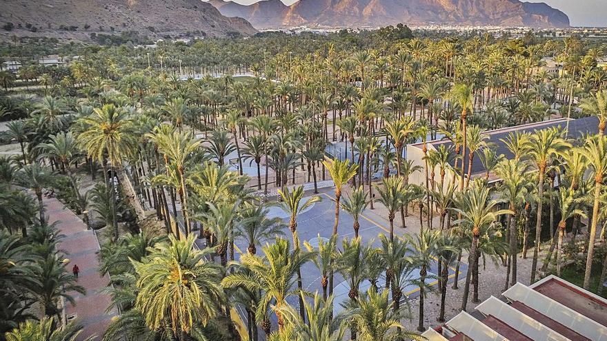 La nueva ordenanza que protege la palmera datilera permitirá a Orihuela actuar en fincas privadas