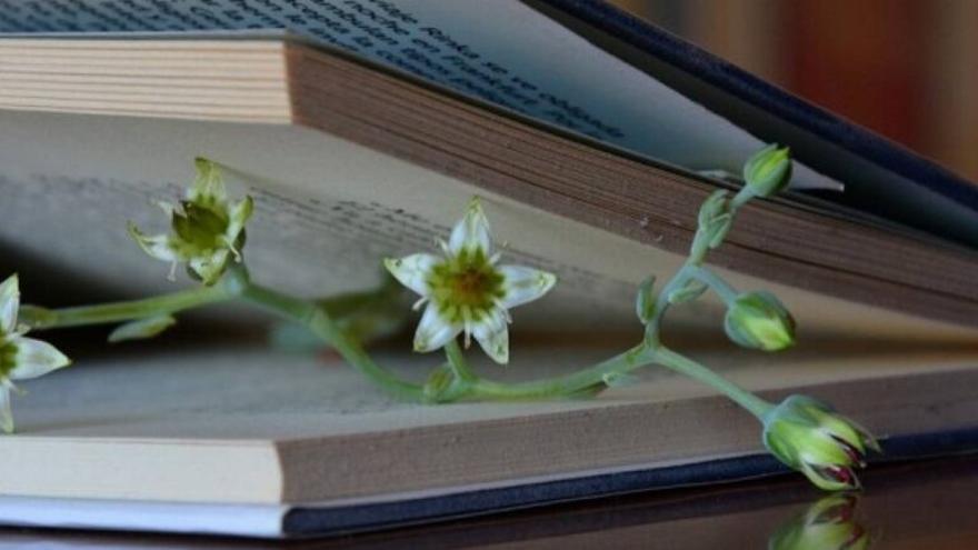 Día del Libro: 12 títulos para entender qué le pasa a la Tierra