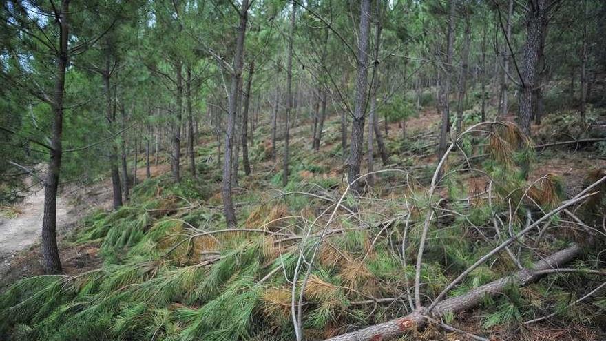 Los comuneros de András limpian y delimitan las más de 150 hectáreas de monte que poseen