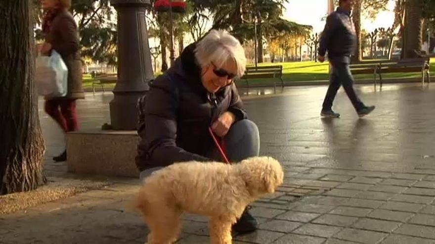 La importancia de la adopción responsable de mascotas