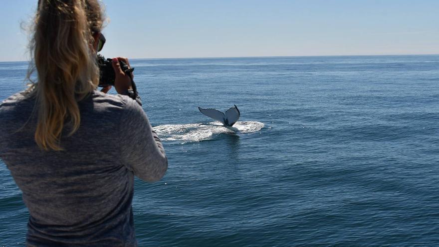 España confía en las ballenas azules de las Rías Baixas para luchar contra el cambio climático