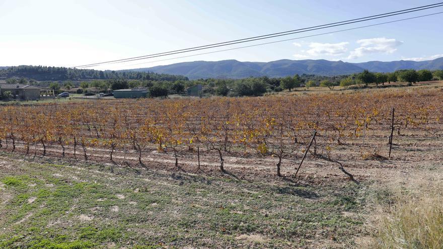 Chiva alegará motivos ambientales para frenar la planta fotovoltaica