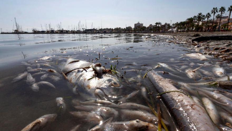 """Una nueva catástrofe ecológica deja """"más que moribundo"""" al Mar Menor"""