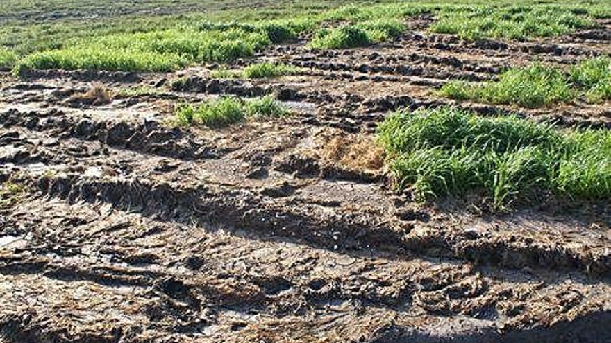 Varias fincas registran depósitos de lodos que alcanzan a dos afluentes del Mandeo