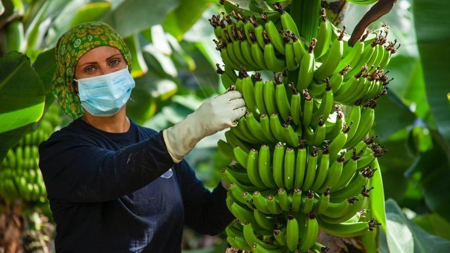 """Apoyo unánime en el Senado al """"blindaje"""" del futuro del plátano canario"""