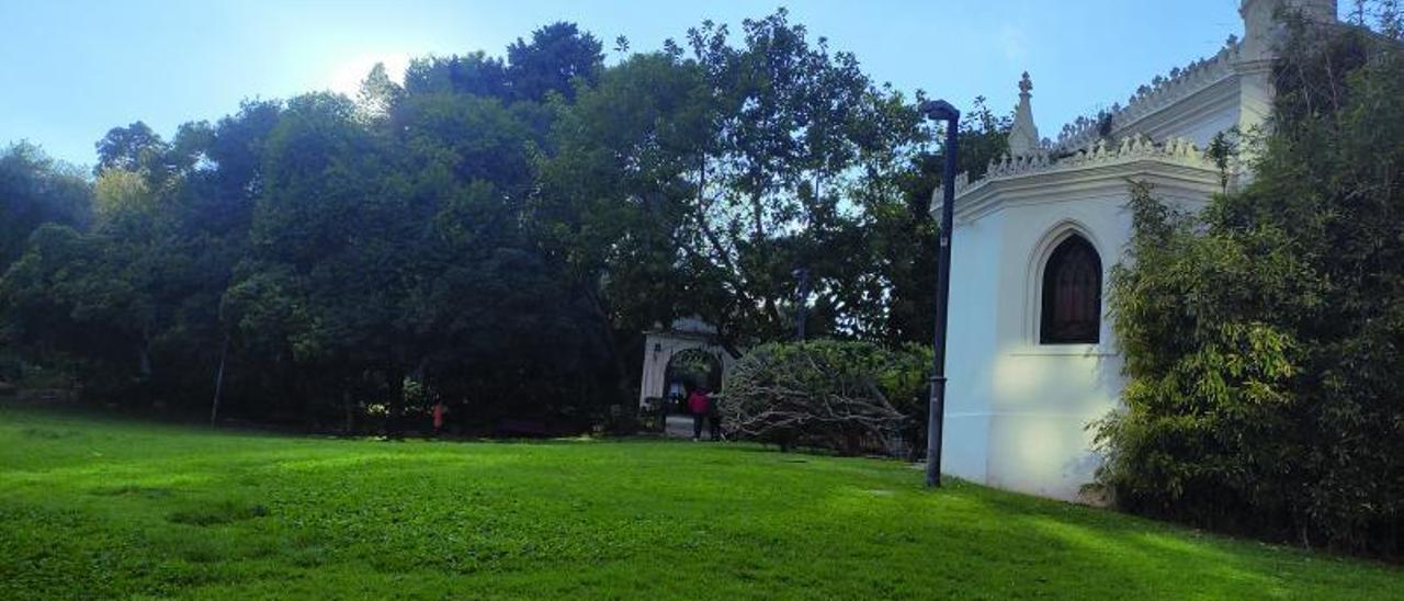 Una de las imponentes yucas  del jardín.    I. OLMOS