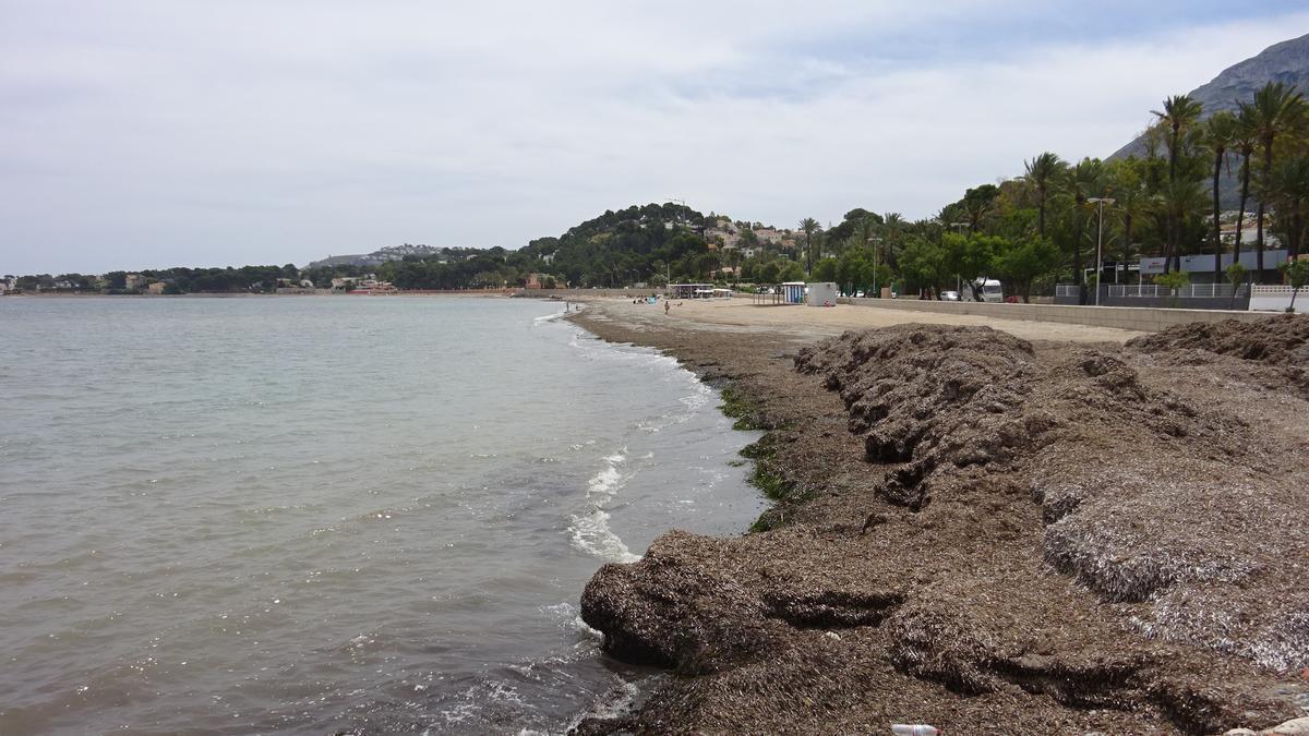 La playa de la Marineta Casiana de Dénia, es una de las que cuenta con punto de baño accesible