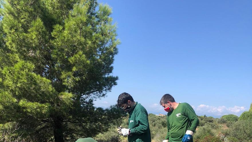 La Fundació Altem elimina les cactàcies invasores a Pau