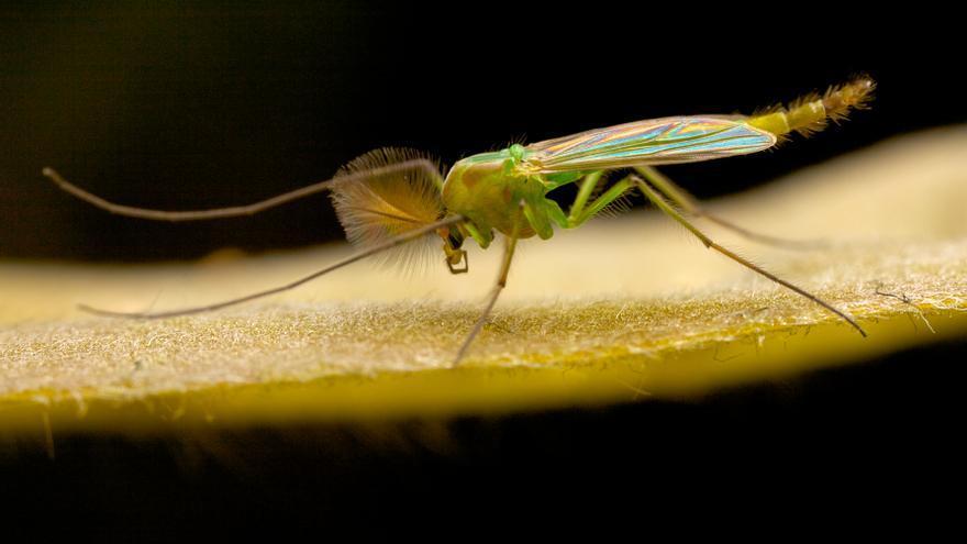 La planta de moda que tienes que poner en casa para deshacerte de los mosquitos