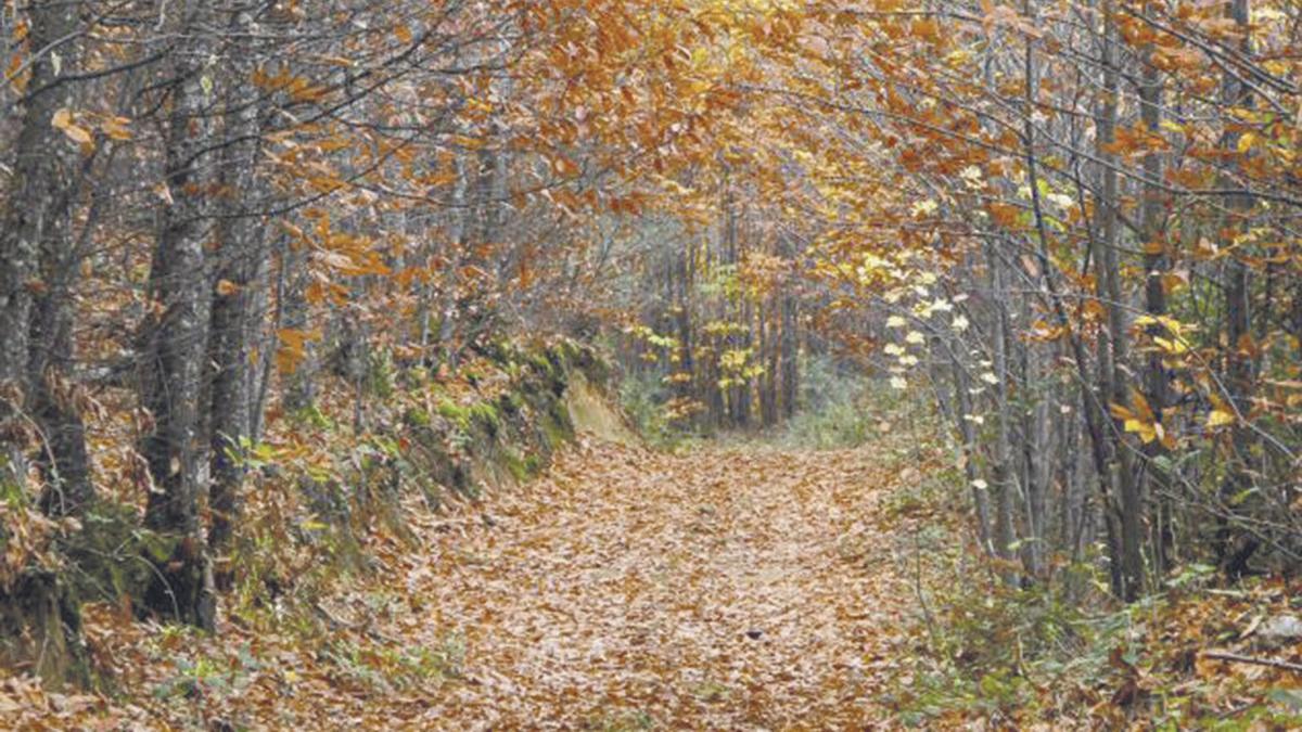 Valle del Jerte en otoño