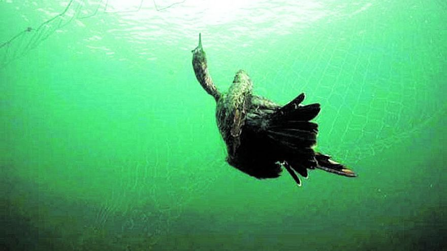 """Los ecologistas advierten de que el """"tresmall"""" causa mortandad de aves protegidas"""