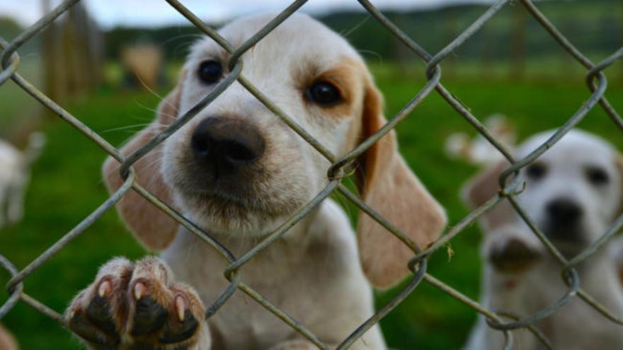 La importancia de la adopción responsable de mascotas en Navidad