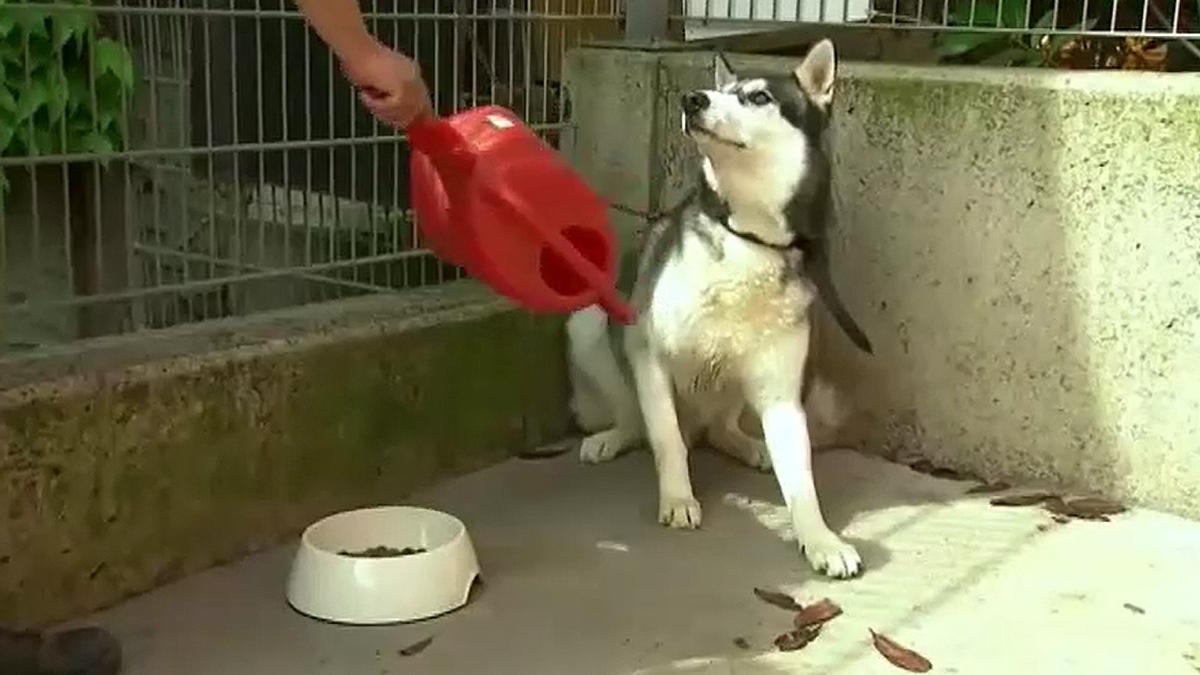 Un perro abandonado en un refugio de animales.