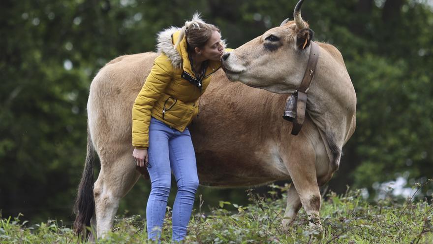 La ganadería asturiana de toda la vida está de moda en Europa