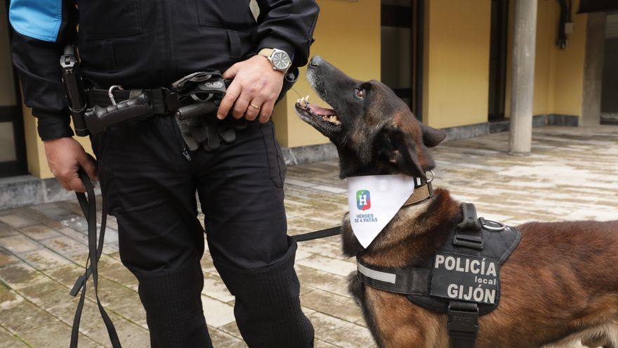 La nueva vida en familia de Argos, el perro policía de Gijón que se acaba de jubilar