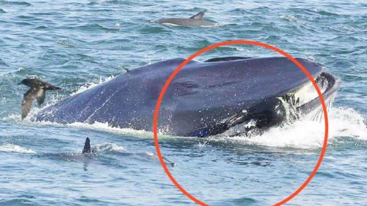 """La imagen del momento en el que la ballena """"pesca"""" al buzo"""