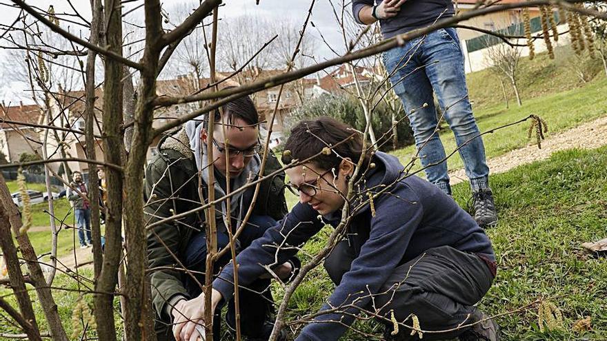 El Quirinal suma 22 árboles más a sus zonas verdes