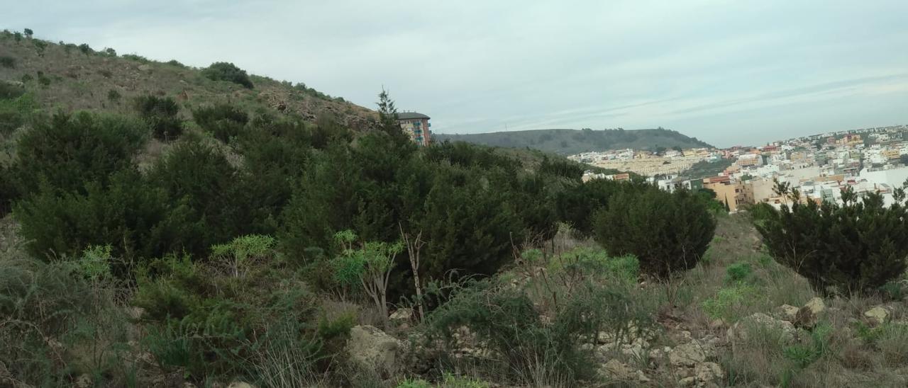 Sabinas jóvenes en la parte alta del barrio capitalino de Isla Perdida