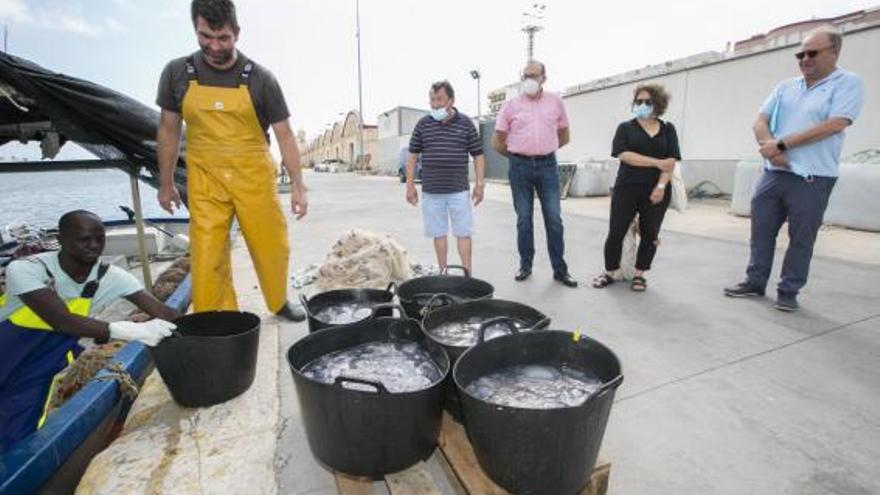 Los pescadores de Gandia vuelven a limpiar la playa de medusas