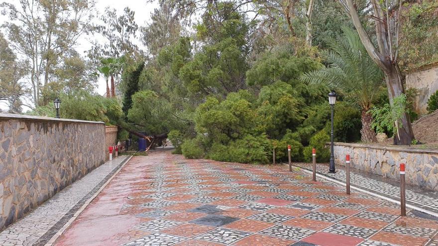 Un árbol caído bloquea el acceso al balneario de Archena