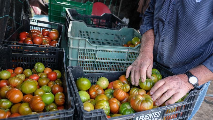 Una investigación de la UA alerta sobre el alto coste ambiental de tirar hortalizas a la basura