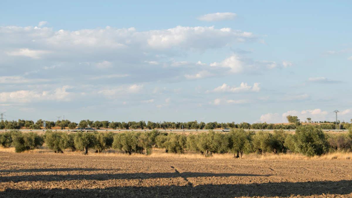 Campos de Torrijos.