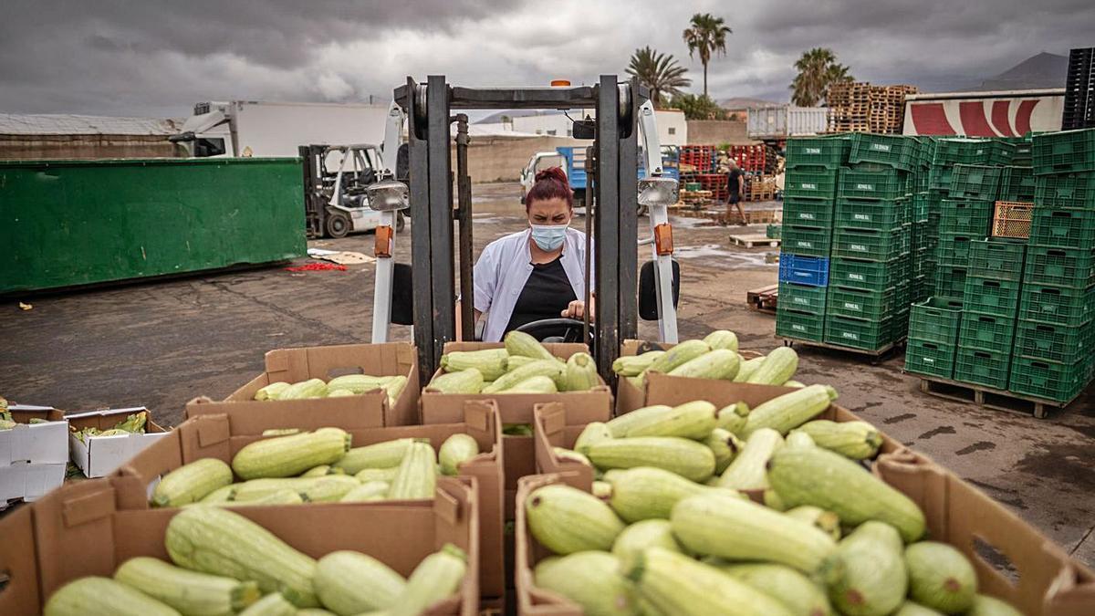 Una agricultora recoge el lunes, en una finca de Granadilla, calabacines para desecharlos como excedente. | | ANDRÉS GUTIÉRREZ