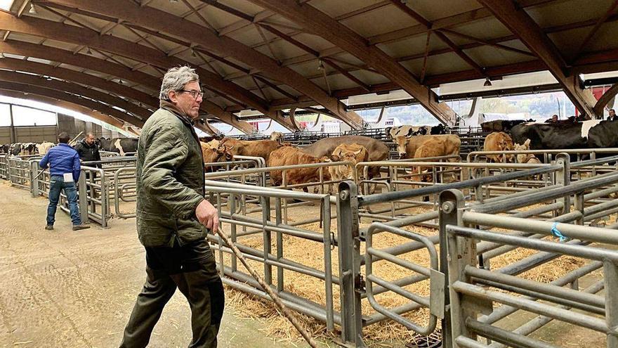 Lío en el mercado de la Pola: ganaderos y tratantes, contra la gestión veterinaria