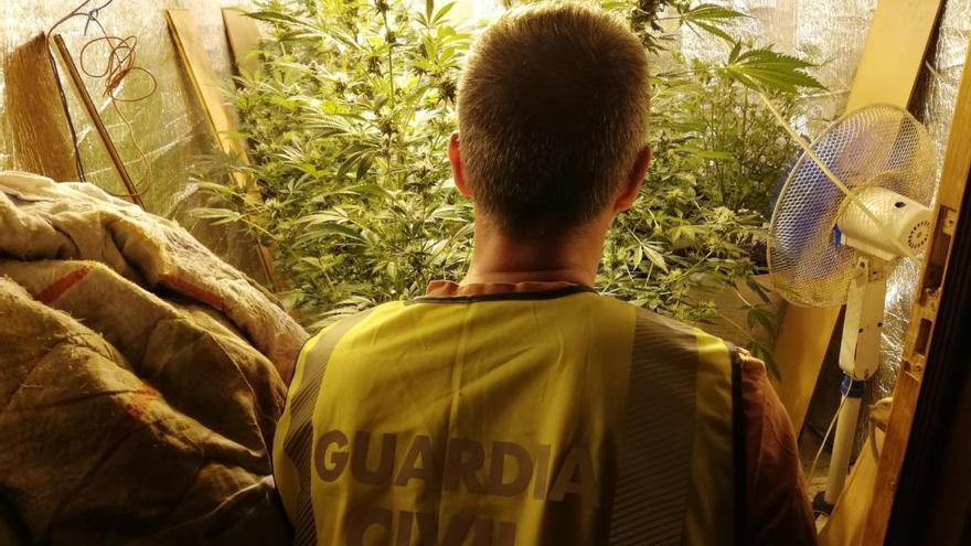 Detenidos dos hermanos de Baiona por una plantación de marihuana