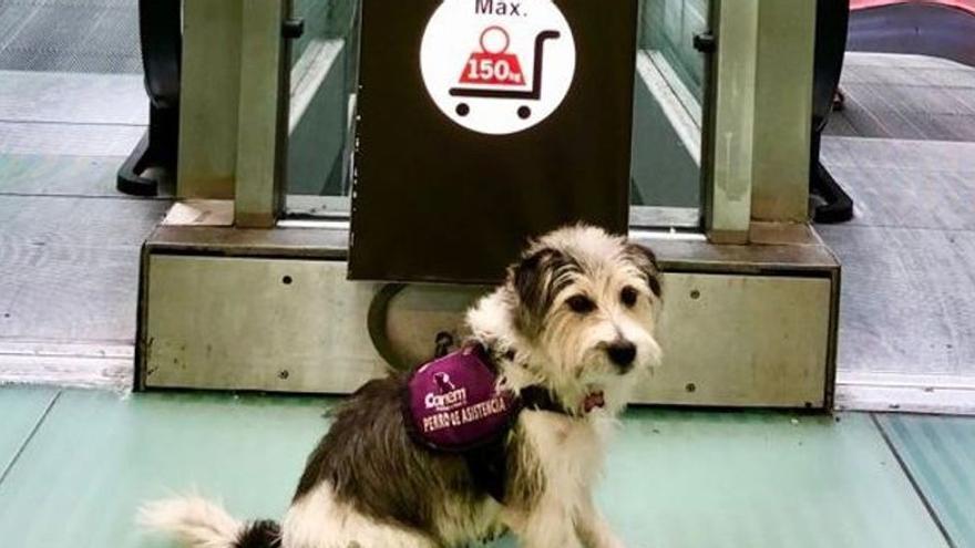 Expulsado un pasajero de un avión que venía a La Palma por ir con su perro de asistencia
