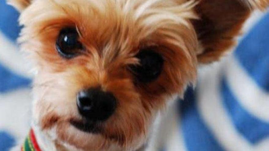 Buscan a un hombre en Lanzarote por matar al perro de sus vecinos