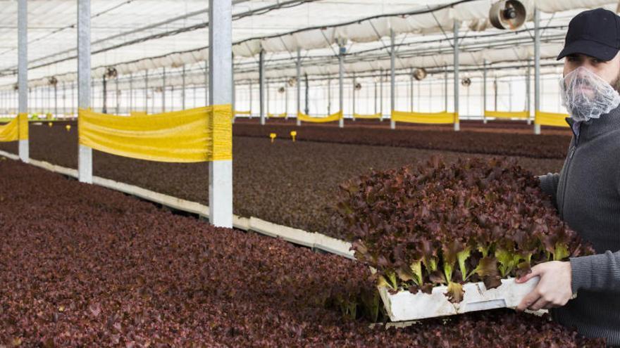 Cultivar sin tierra: llegan los hidropónicos