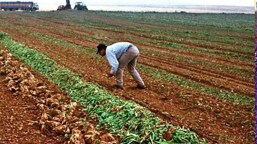 Ofrecen ayudas de once millones para modernizar explotaciones agrícolas