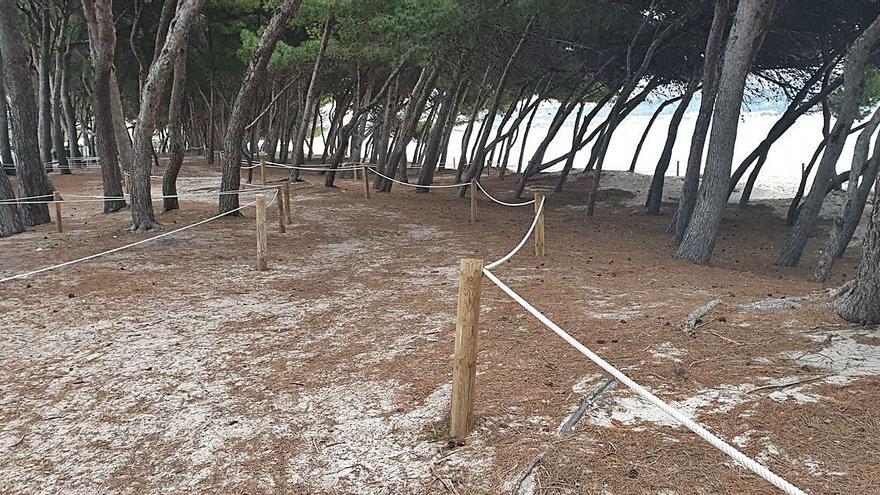 Vecinos de Alcúdia denuncian  el cierre de una zona de pinar