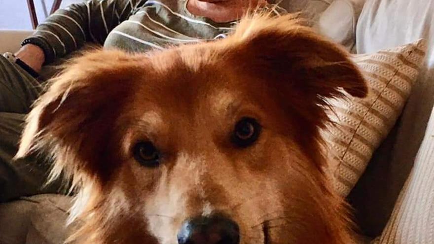 Buscan a un perro perdido en el aeropuerto de Gran Canaria