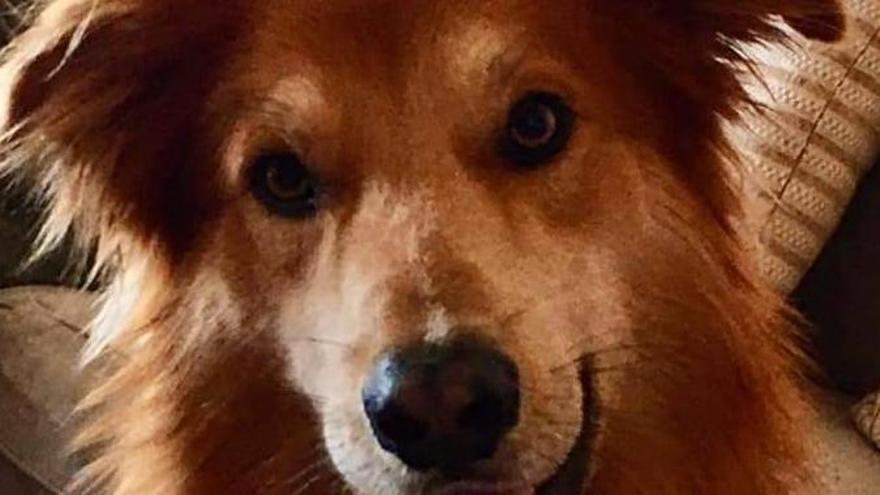 Charly, el perro perdido en el aeropuerto de Gran Canaria.