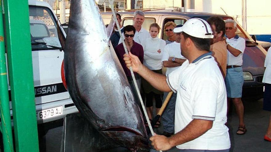 Los pescadores canarios llevan ante la Justicia europea el reparto del atún rojo