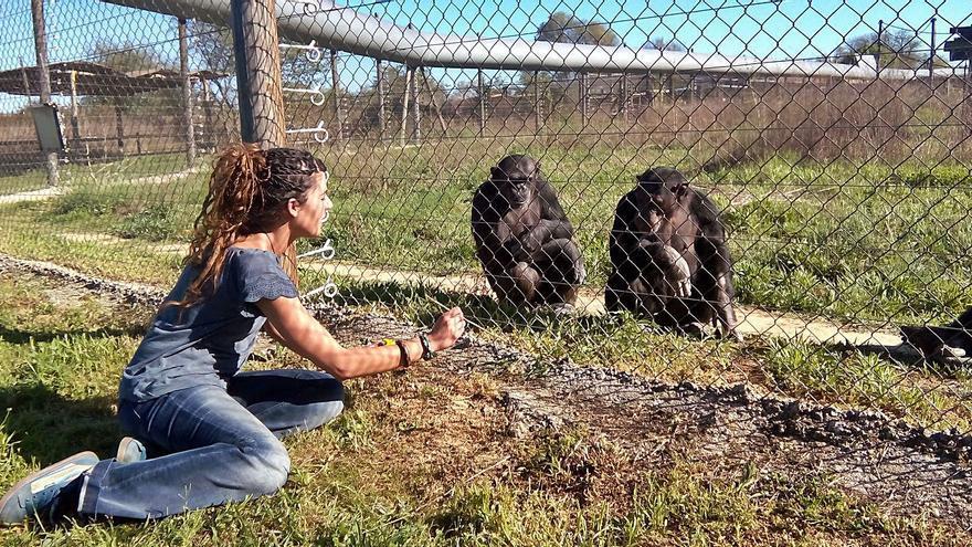 Los simios también sufren depresión
