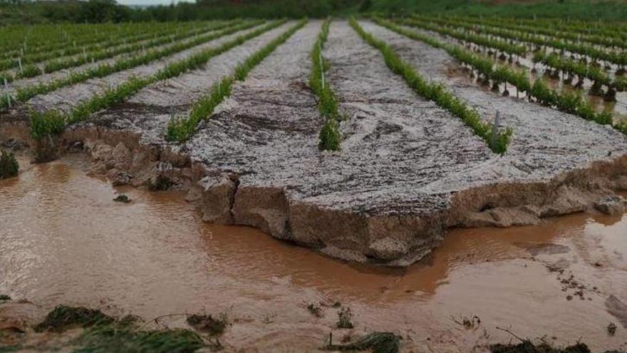 La superficie afectada por el pedrisco en Aragón aumenta hasta las 30.000 hectáreas