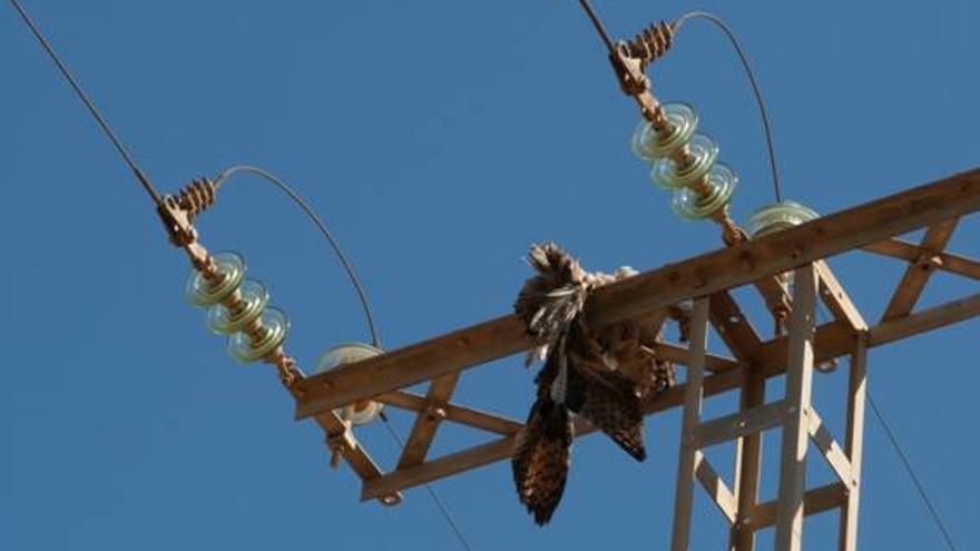 Anse, en contra de la construcción de una planta solar en el Valle del Guadalentín