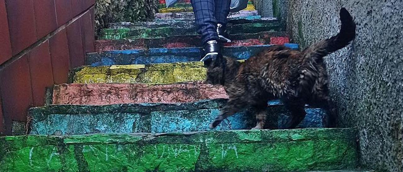 Una mujer y un gato suben por la Escalera de Colores.   Eva San Román