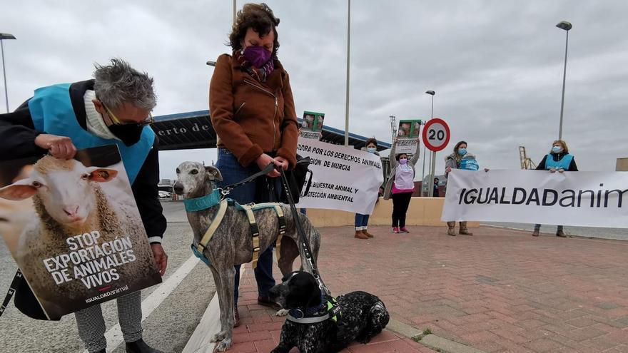 El barco Karim Allah desencadena protestas contra el transporte de animales