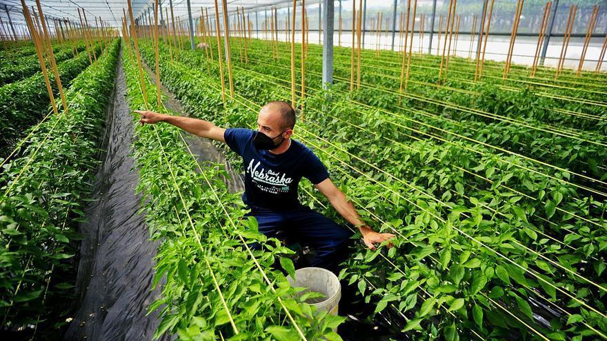 La agricultura de O Salnés sale fortalecida del COVID con más productores y mayor facturación