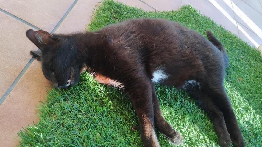 Lex Ànima demana que investiguin una matança de gats a Albanyà