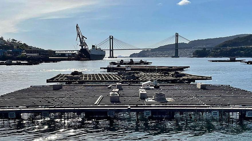 La ría de Vigo, banco de pruebas para un proyecto de bateas de cultivo a mar abierto