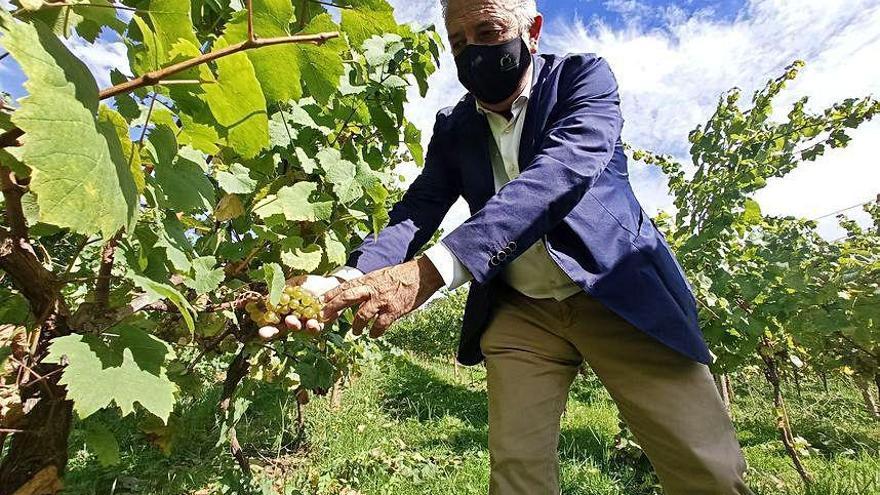 Asturias, un brindis al futuro con vino