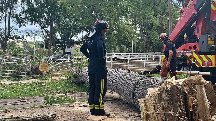 """Un árbol cae sobre el """"Kilometrín""""  y daña parte del paseo del Piles"""
