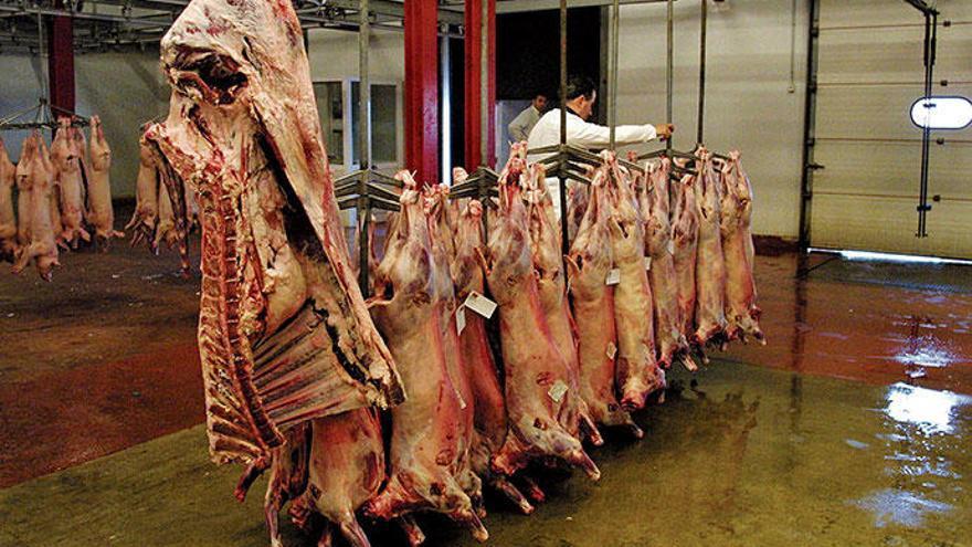 Kann man auf Mallorca bald kein Fleisch mehr von der Insel kaufen?