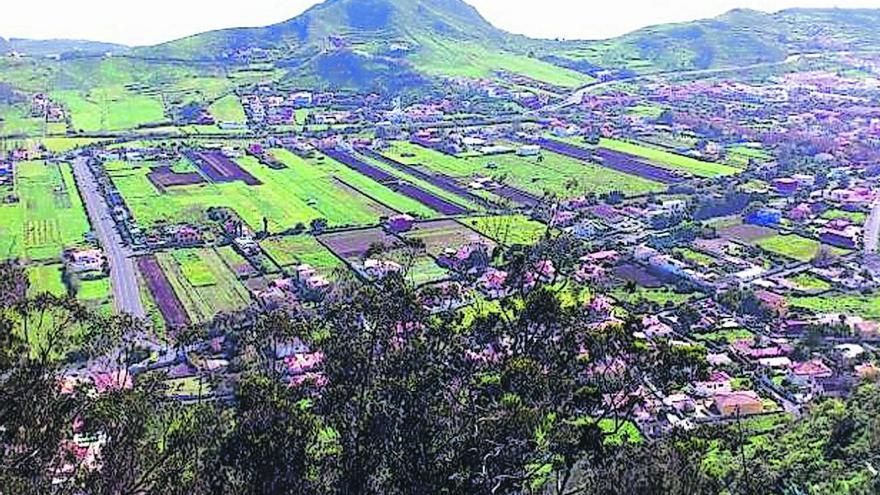Plantan 200 fayas en Mesa Mota para recuperar el ecosistema